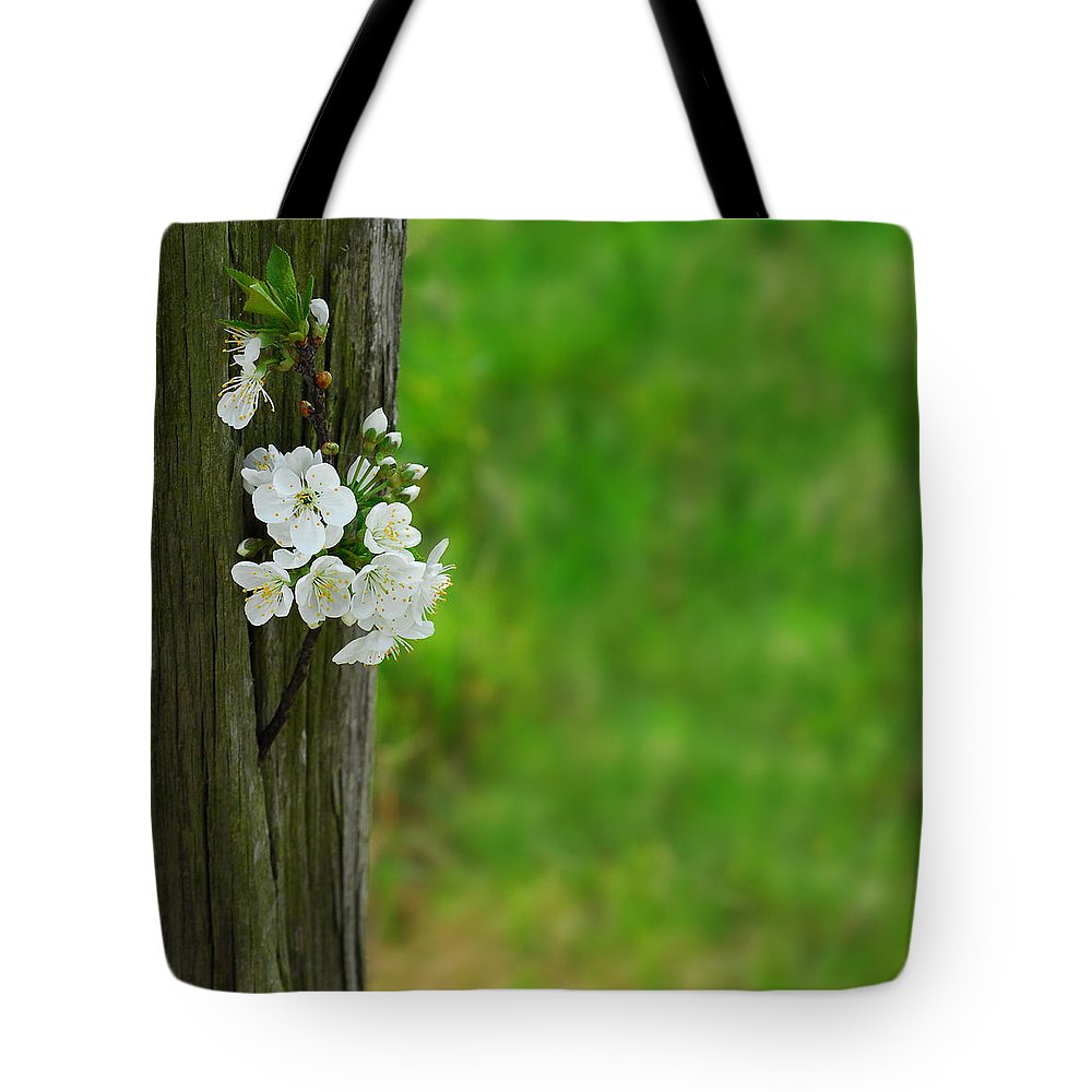 Garden Tote Bag featuring the photograph Blossoms by TouTouke A Y