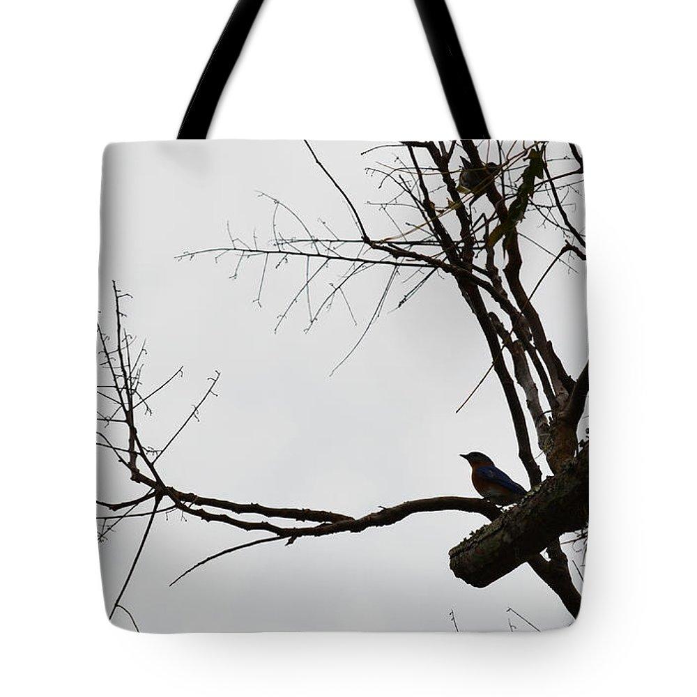 Blue Bird Tote Bag featuring the photograph Blue Bird by Linda Kerkau