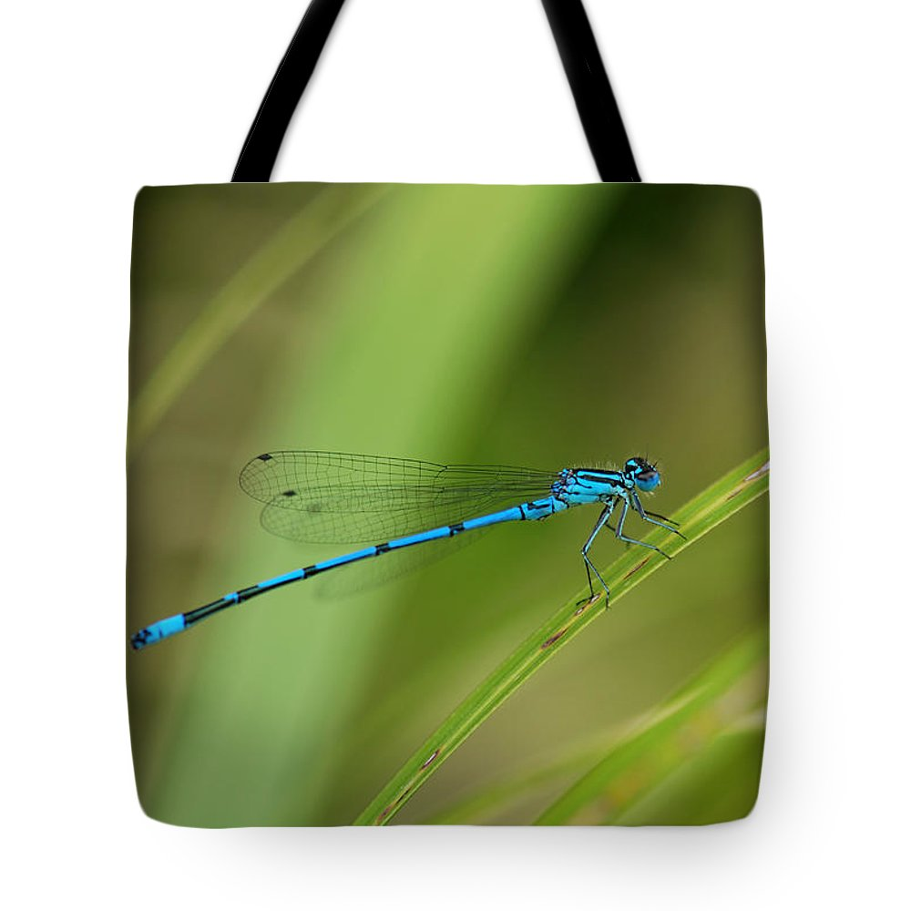 Damselfly Tote Bag featuring the photograph Blue Damselfly by Grigorios Moraitis