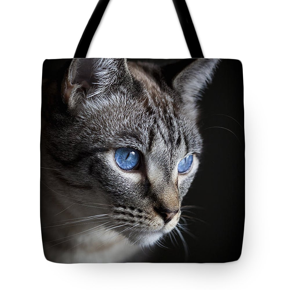 Tabby Tote Bag featuring the photograph Blue Eyes by Diane Macdonald