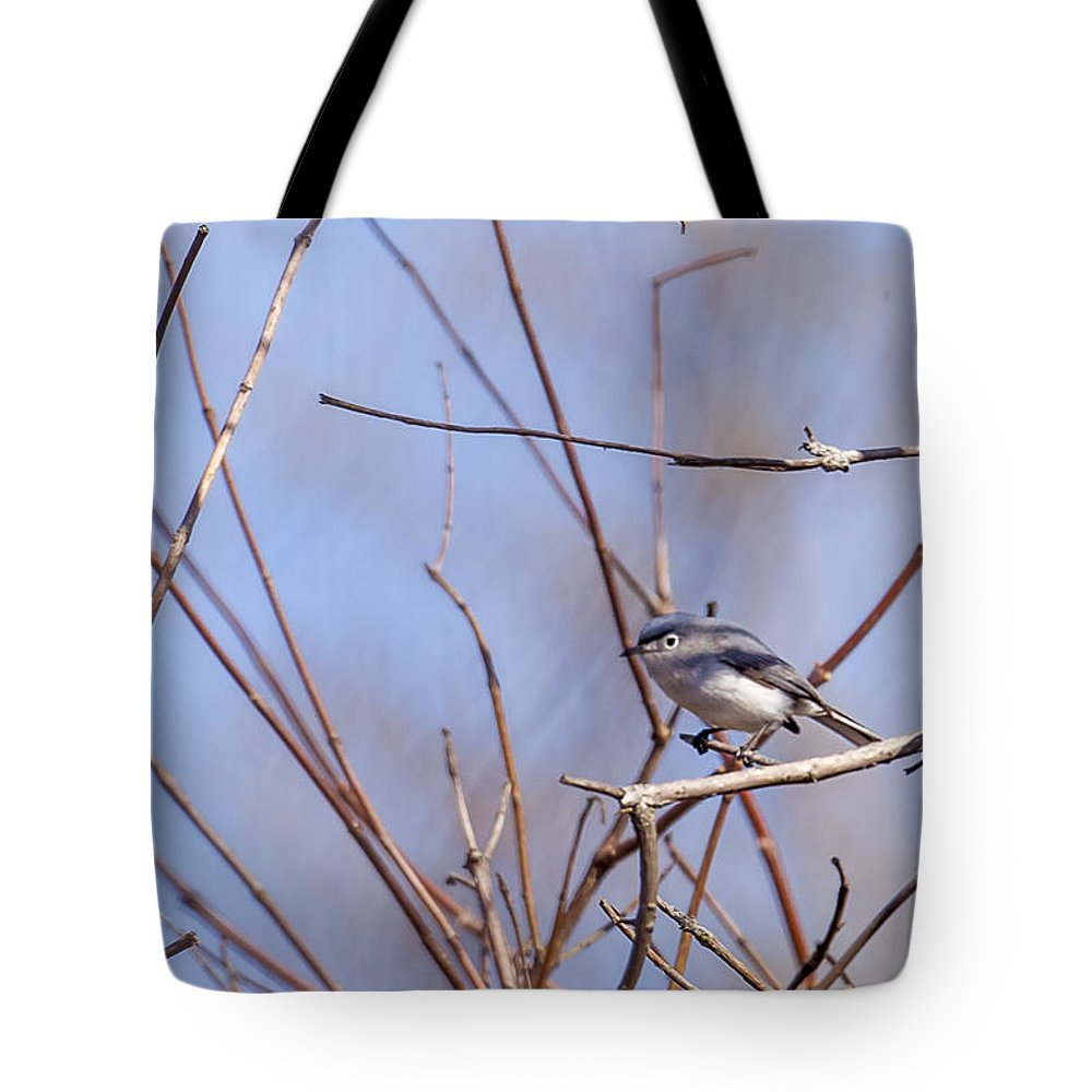 Animal Tote Bag featuring the photograph Blue-gray Gnatcatcher by Jack R Perry