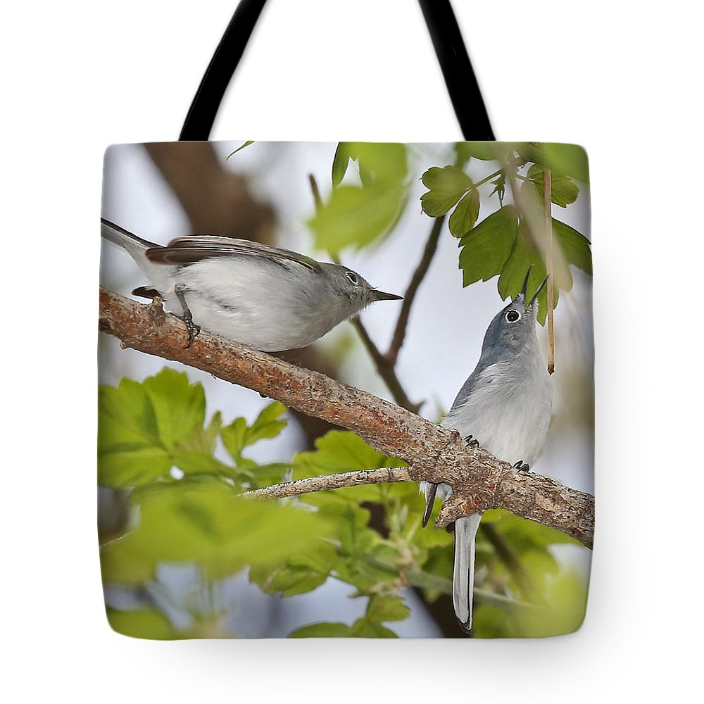 Birds Tote Bag featuring the photograph Blue-gray Gnatcatcher by Mike Dickie