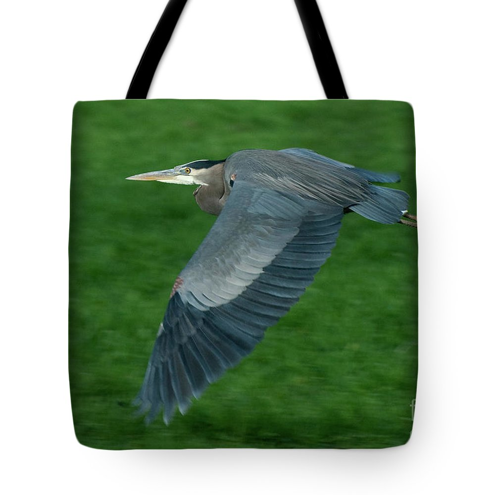 Birds Tote Bag featuring the photograph Blue Heron by Rod Wiens