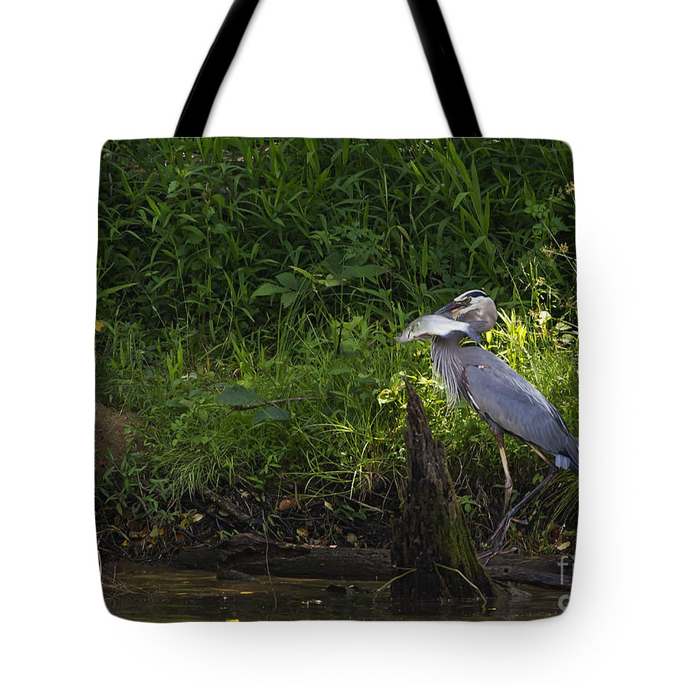 Bird Tote Bag featuring the photograph Blue Heron With A Fish-signed by J L Woody Wooden