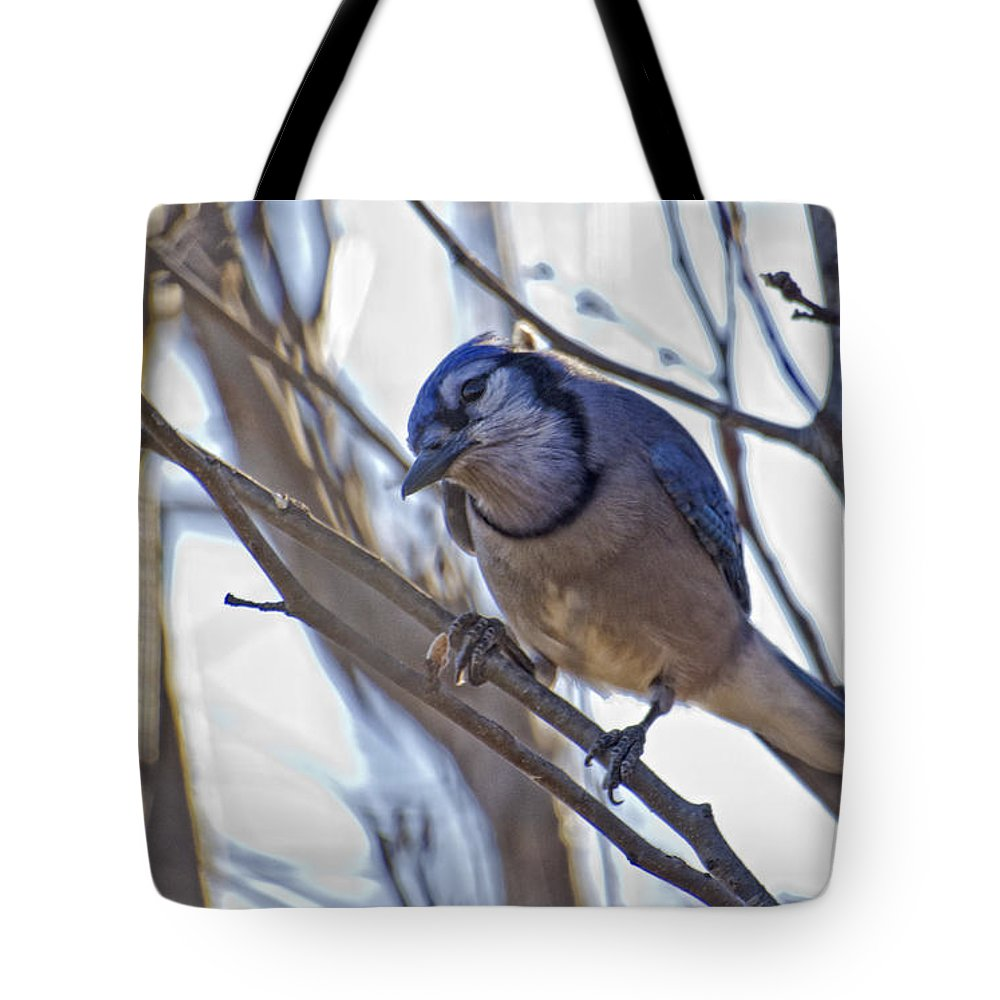 Bluejay Tote Bag featuring the photograph Is This My Good Side by Shelly Gunderson