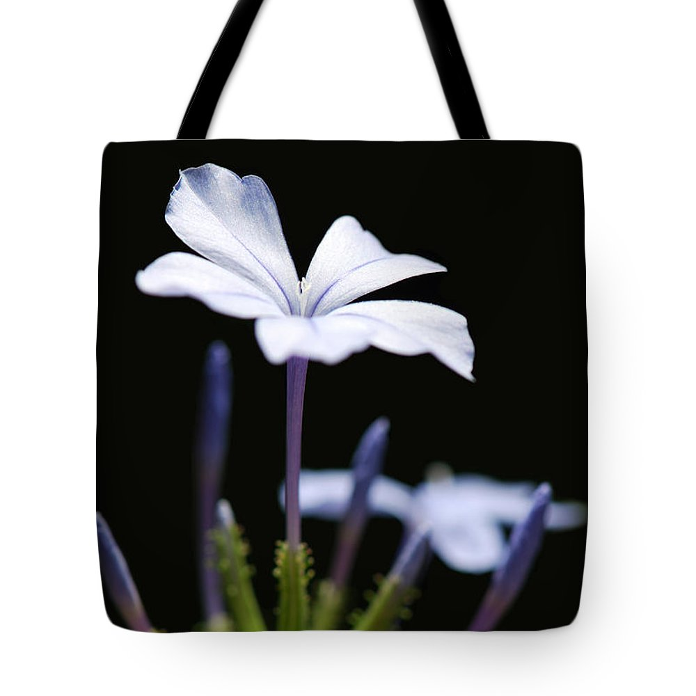 Phlox Tote Bag featuring the photograph Blue Phlox by Grigorios Moraitis