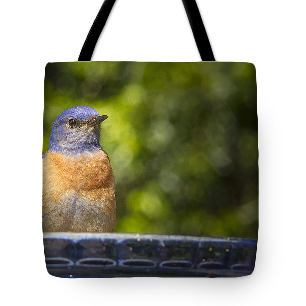 Animals Tote Bag featuring the photograph Blue Plate Special by Jean Noren