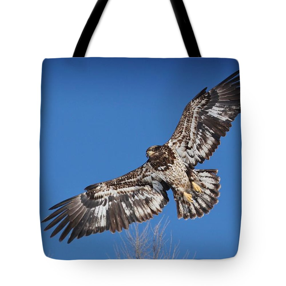 Bald Eagle Tote Bag featuring the photograph Blue Sky Flight by Teresa McGill