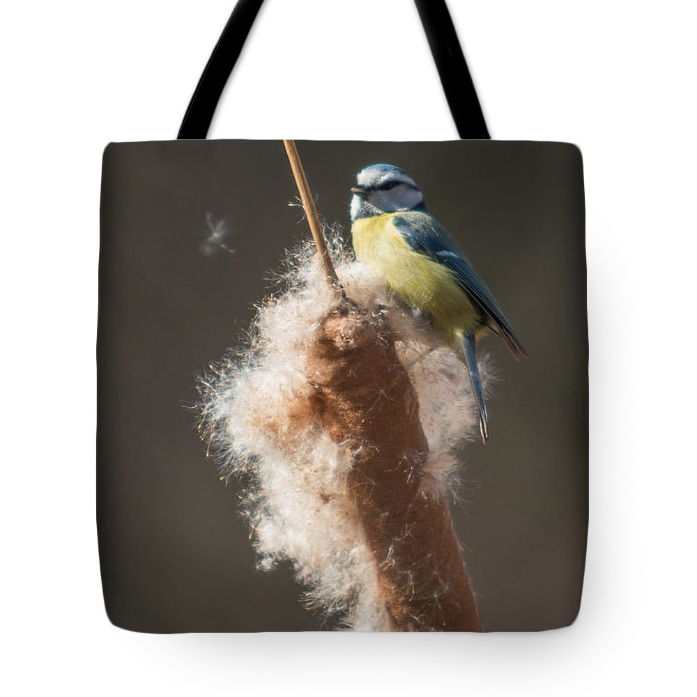 Parus Caeruleus Tote Bag featuring the photograph Blue Tit by Jivko Nakev