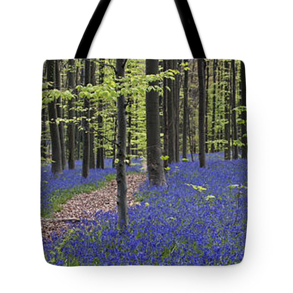 Bluebells Tote Bag featuring the photograph Bluebells In Beech Forest by Arterra Picture Library