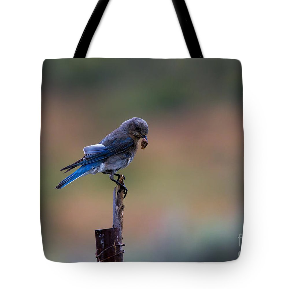 Mountain Bluebird Tote Bag featuring the photograph Bluebird Lunch by Mike Dawson