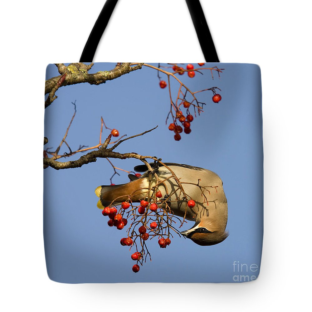 Bohemian Waxwing Tote Bag featuring the photograph Bohemian Waxwing Eating Rowan Berries by Liz Leyden