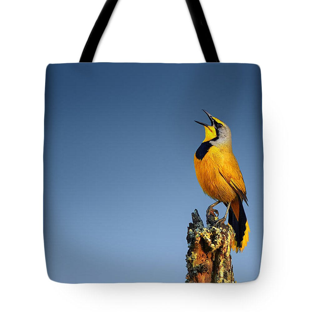 Bokmakierie Tote Bag featuring the photograph Bokmakierie Bird Calling by Johan Swanepoel