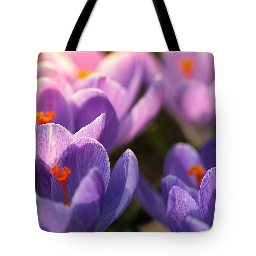 Crocus Tote Bag featuring the photograph Bold Awakening by Rob Blair
