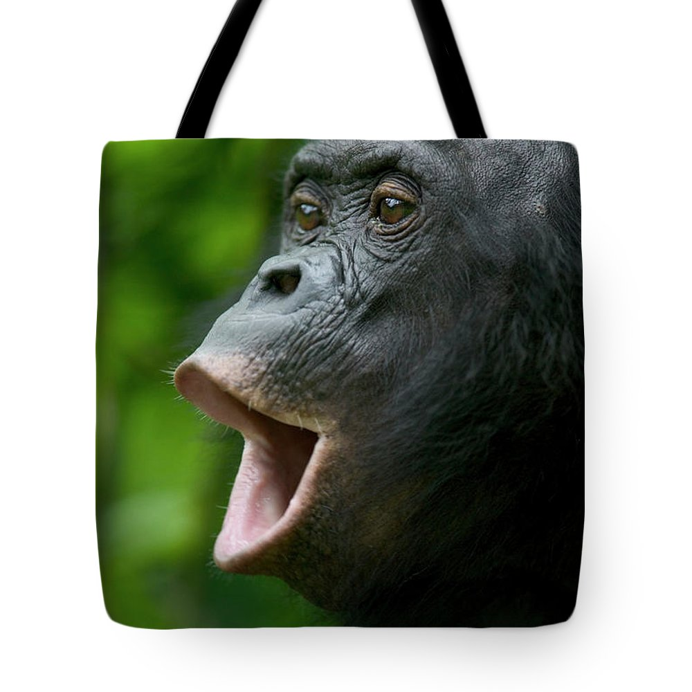 Jh Tote Bag featuring the photograph Bonobo Female Calling by Cyril Ruoso