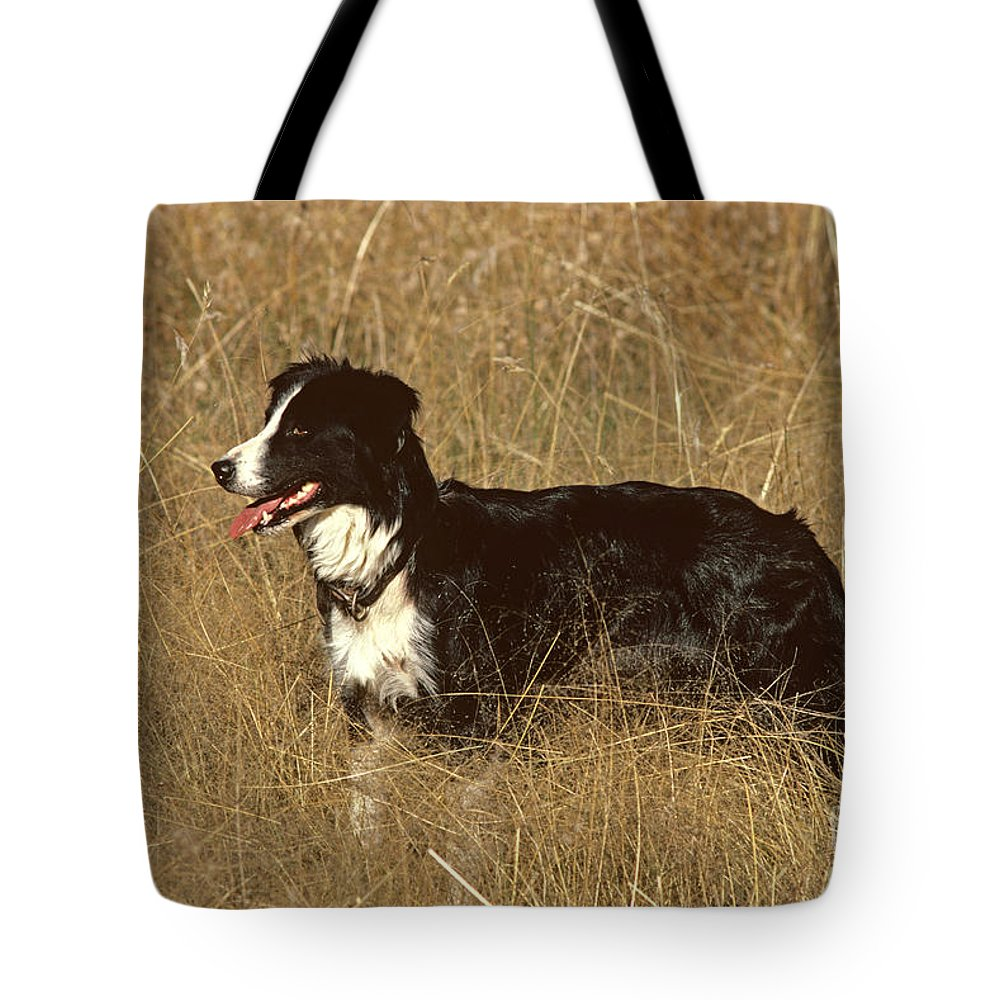 Border Collie Tote Bag featuring the photograph Border Collie by Jean-Paul Ferrero