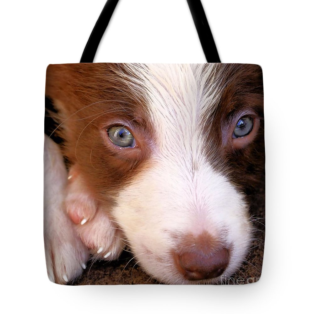 Cute Tote Bag featuring the photograph Border Collie Tan And White Pup by Brian Raggatt
