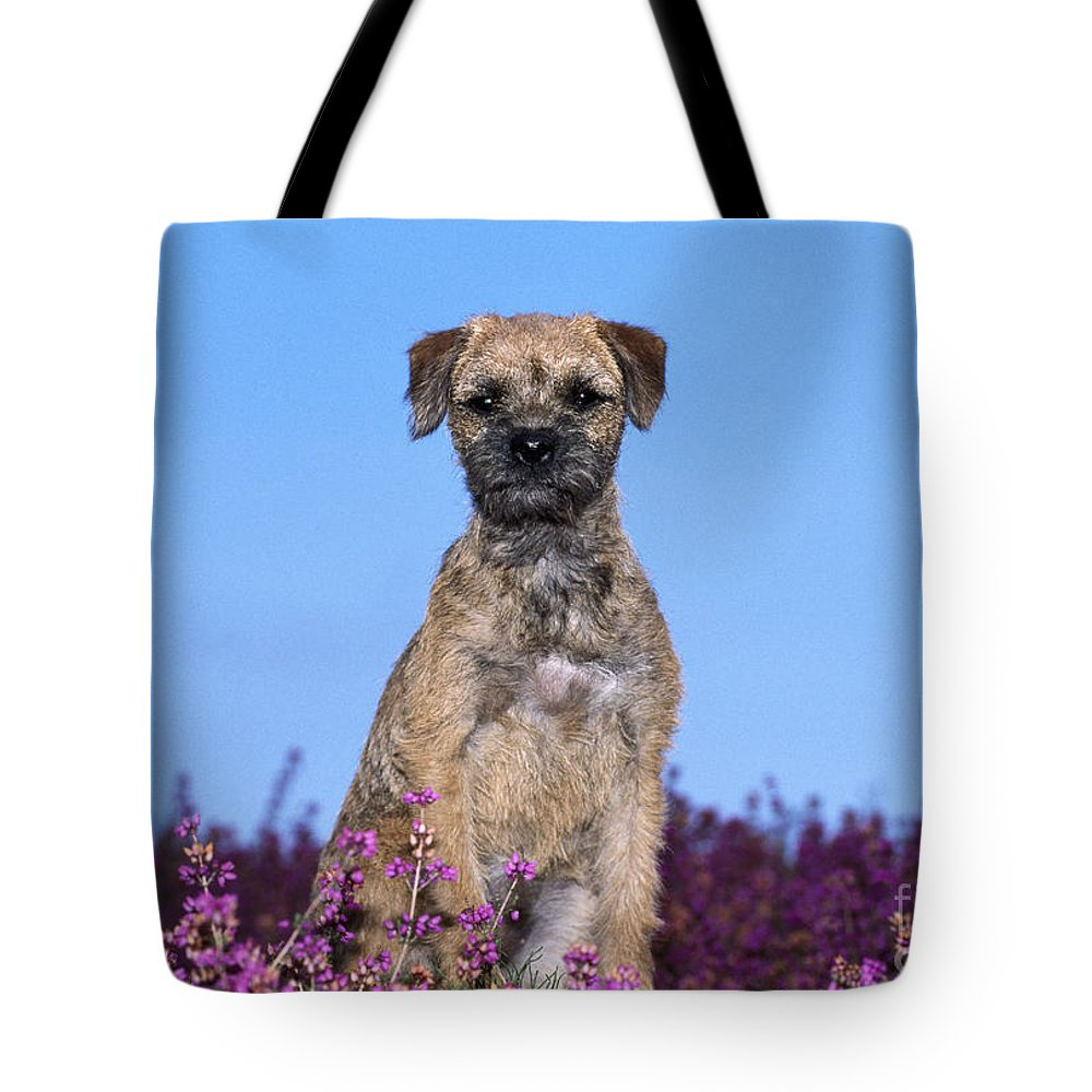 Border Terrier Tote Bag featuring the photograph Border Terrier Dog, In Heather by John Daniels