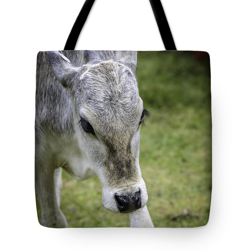 Calf Tote Bag featuring the photograph Born To Flirt by LeeAnn McLaneGoetz McLaneGoetzStudioLLCcom