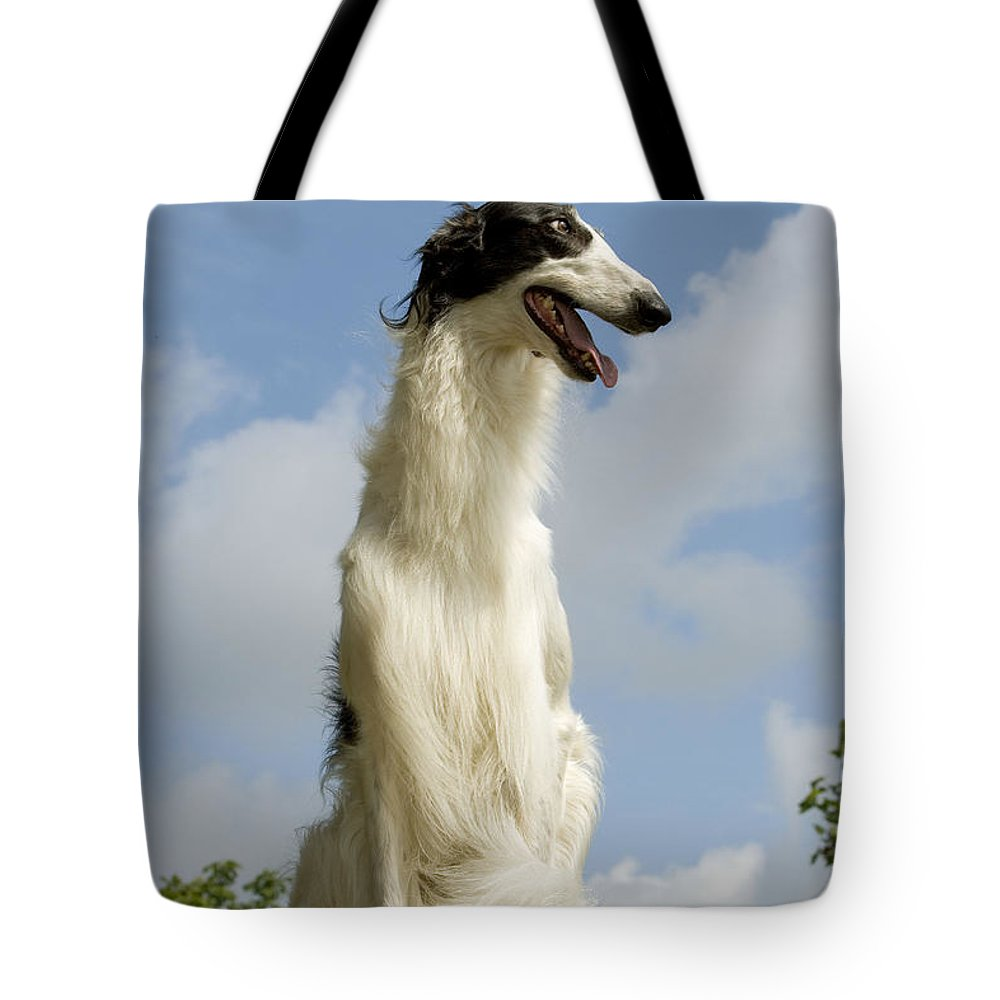 Borzoi Tote Bag featuring the photograph Borzoi Or Russian Wolfhound by Jean-Michel Labat