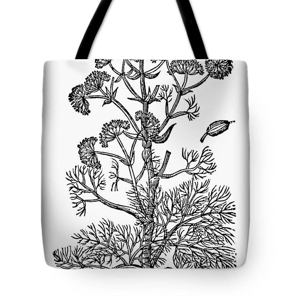 1597 Tote Bag featuring the photograph Botany: Giant Fennel, 1597 by Granger