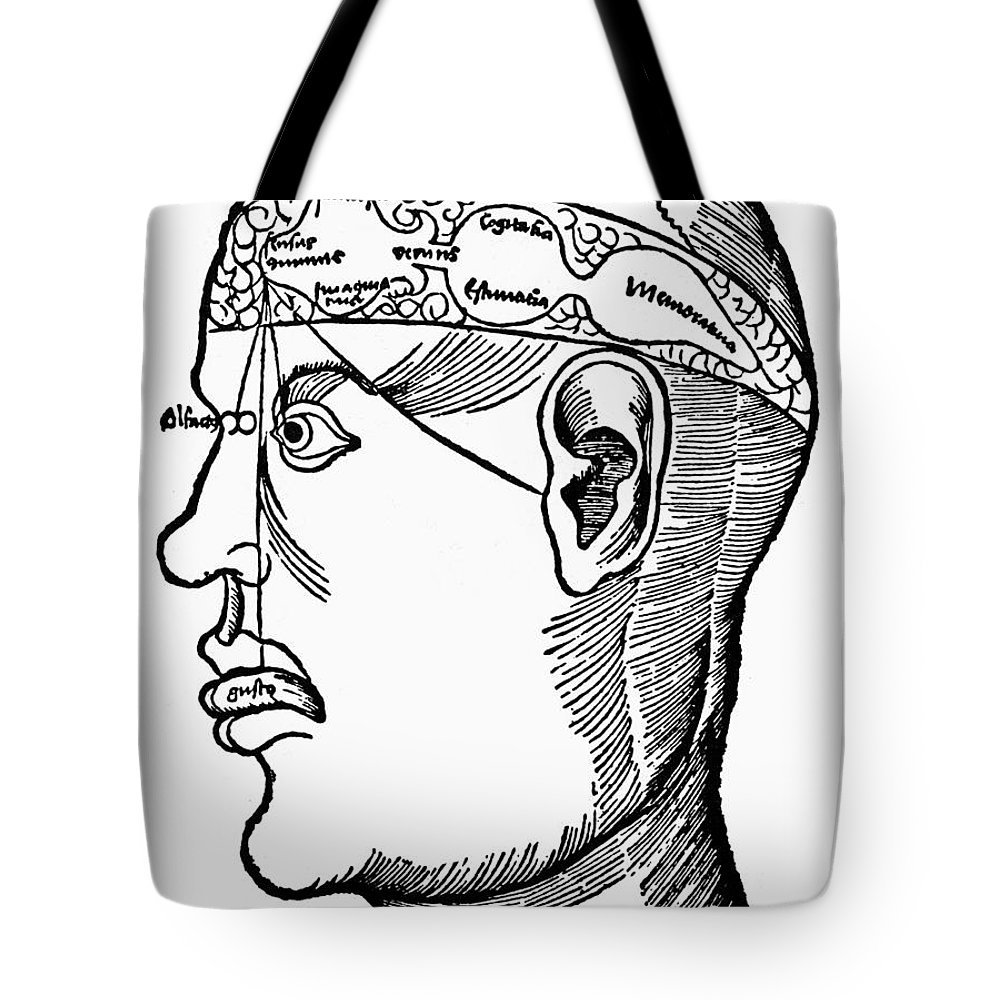 1503 Tote Bag featuring the photograph Brain Diagram, 1503 by Granger