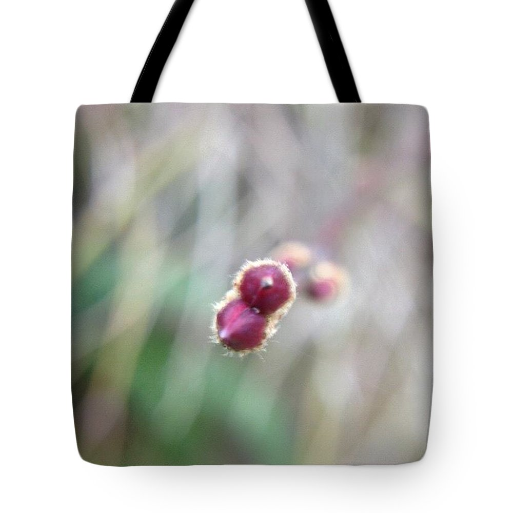 Branch Tips I Chinese Elm Tote Bag featuring the photograph Branch Tips I Chinese Elm by Anna Porter