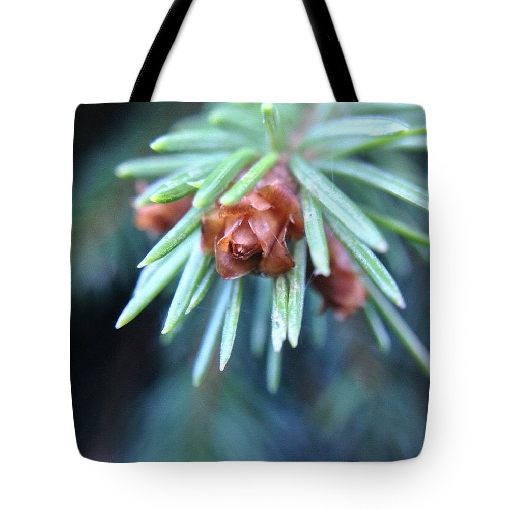 Branch Tips Ii Blue Spruce Tote Bag featuring the photograph Branch Tips II Blue Spruce by Anna Porter