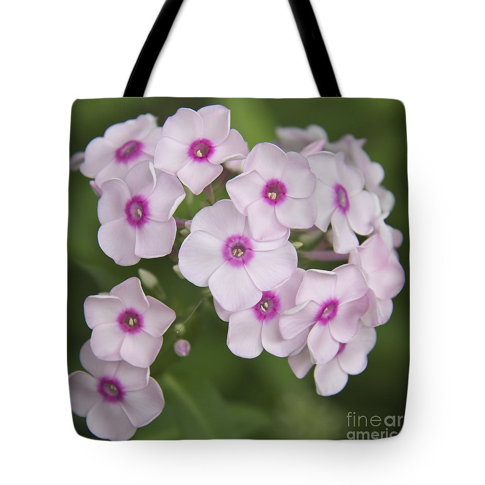 Phlox Tote Bag featuring the photograph Bright Eyes Squared by Teresa Mucha