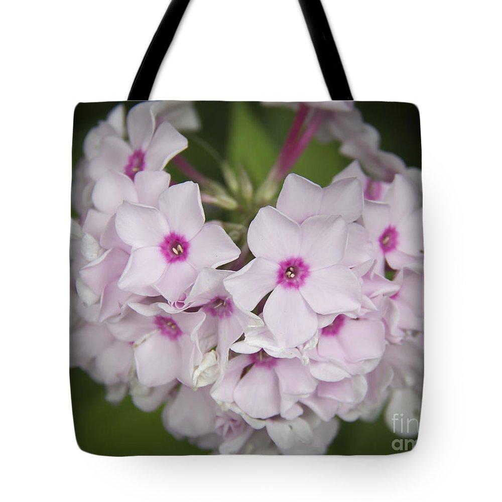 Phlox Tote Bag featuring the photograph Bright Eyes by Teresa Mucha