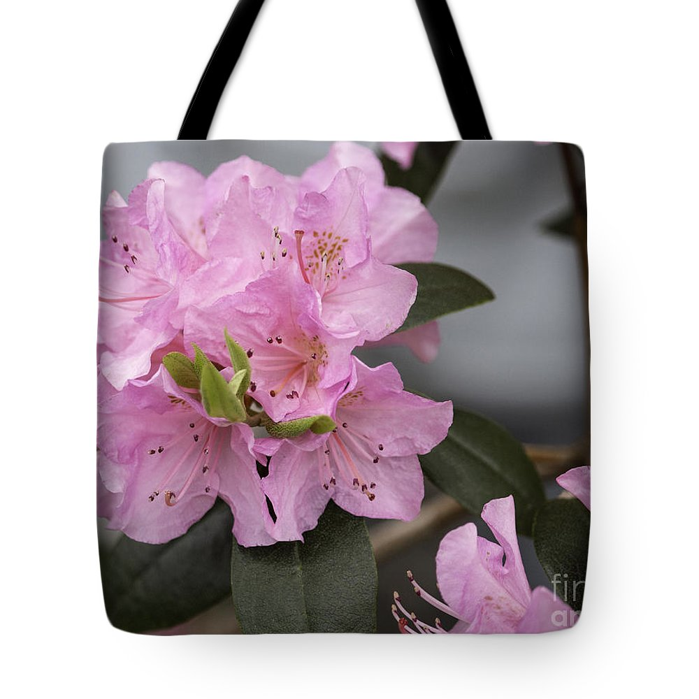 Spring Tote Bag featuring the photograph Bright Pink Azalea by Arlene Carmel