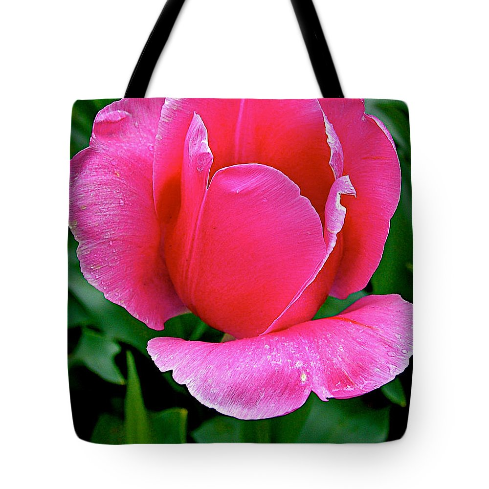 Bright Pink Tulip In Kuekenhof Flower Park Tote Bag featuring the photograph Bright Pink Tulip In Kuekenhof Flower Park-netherlands by Ruth Hager