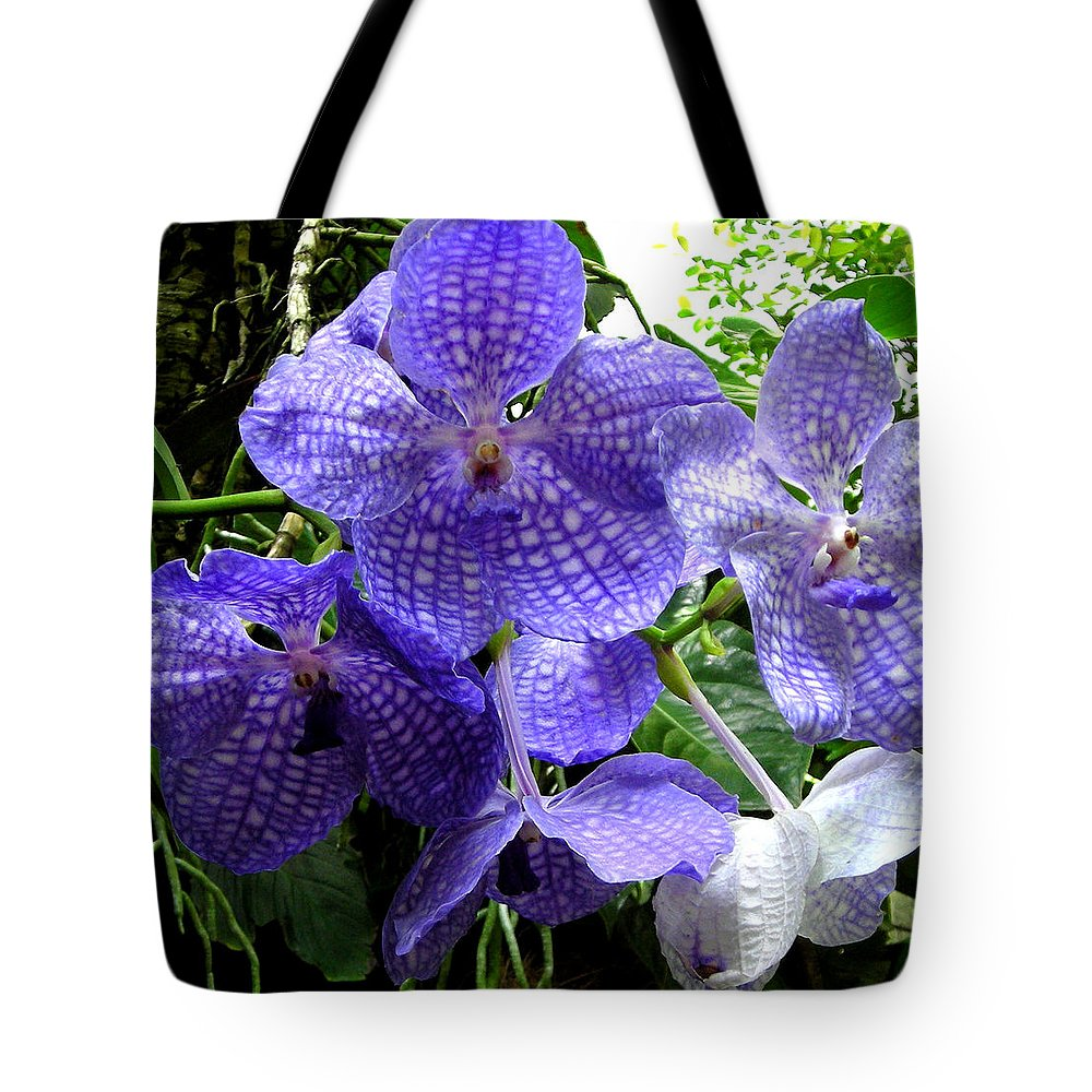 Orchid Tote Bag featuring the photograph Brilliant Checkerboard Purple Orchid by Scarebaby Design