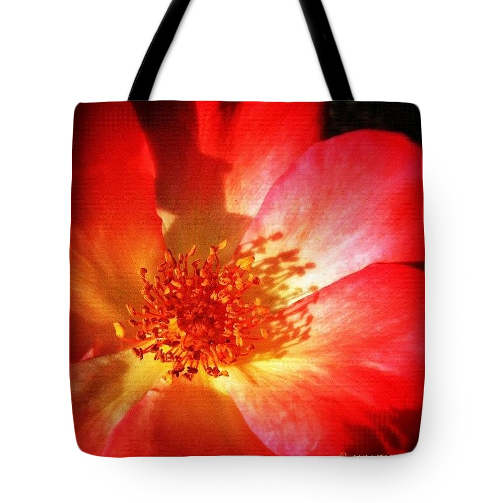 Flower Tote Bag featuring the photograph Brilliant Summer Rose by Anna Porter