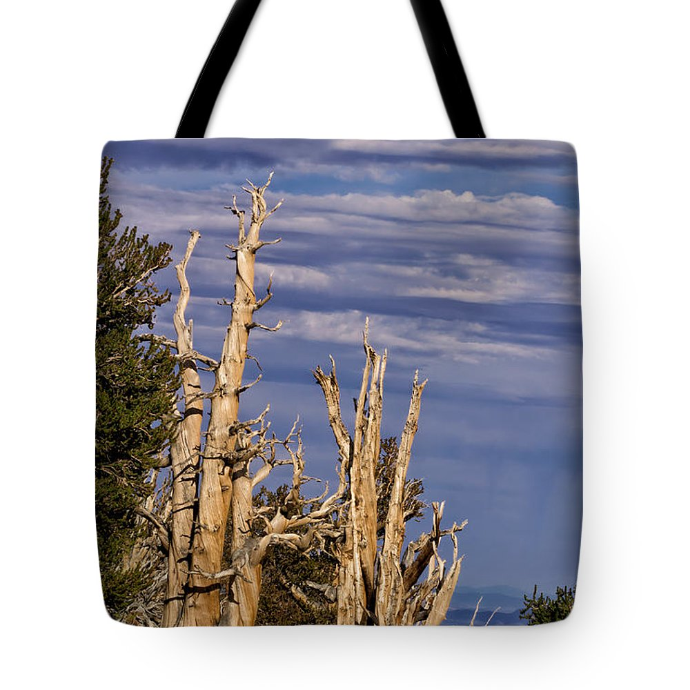 Bristlecone Tote Bag featuring the photograph Bristlecone Warriors by Kathleen Bishop