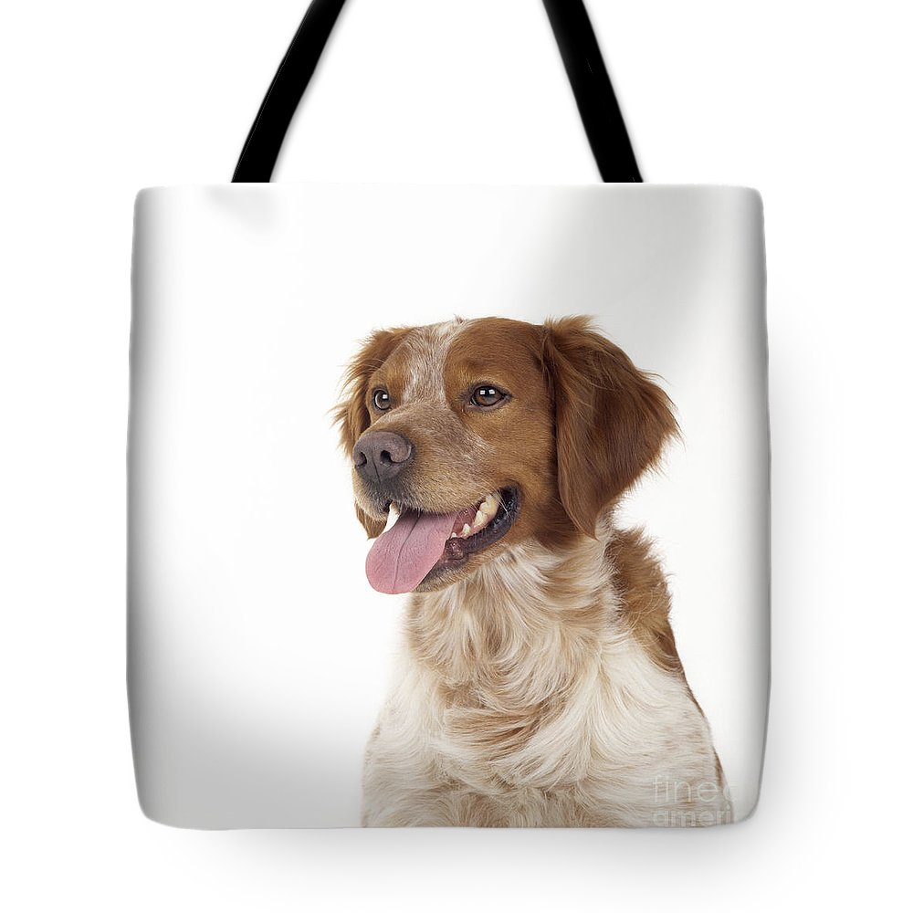 Brittany Tote Bag featuring the photograph Brittany Dog, Close-up Of Head by John Daniels