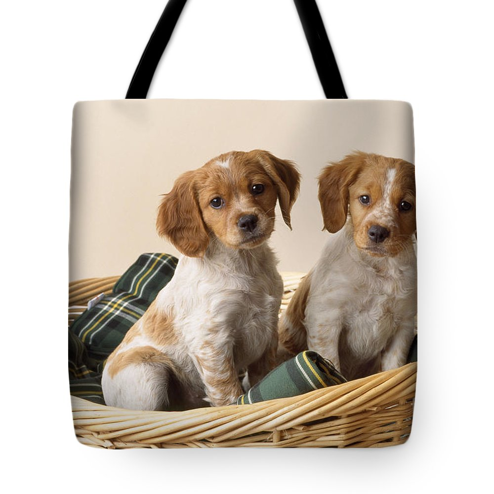 Brittany Tote Bag featuring the photograph Brittany Dog Puppies In Basket by John Daniels