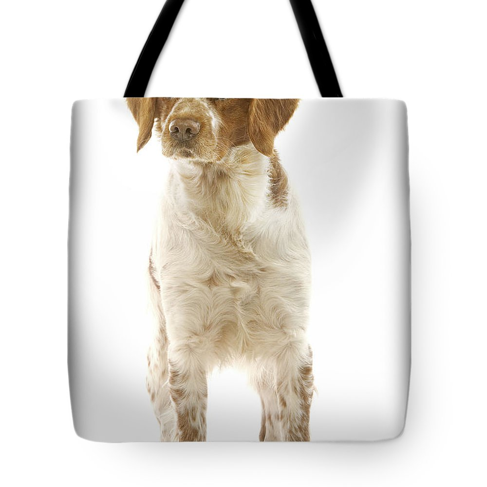 Brittany Spaniel Tote Bag featuring the photograph Brittany Spaniel by Jean-Michel Labat