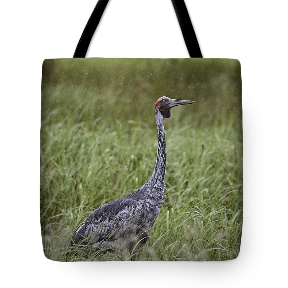 Top-end Tote Bag featuring the photograph Brolga by Douglas Barnard