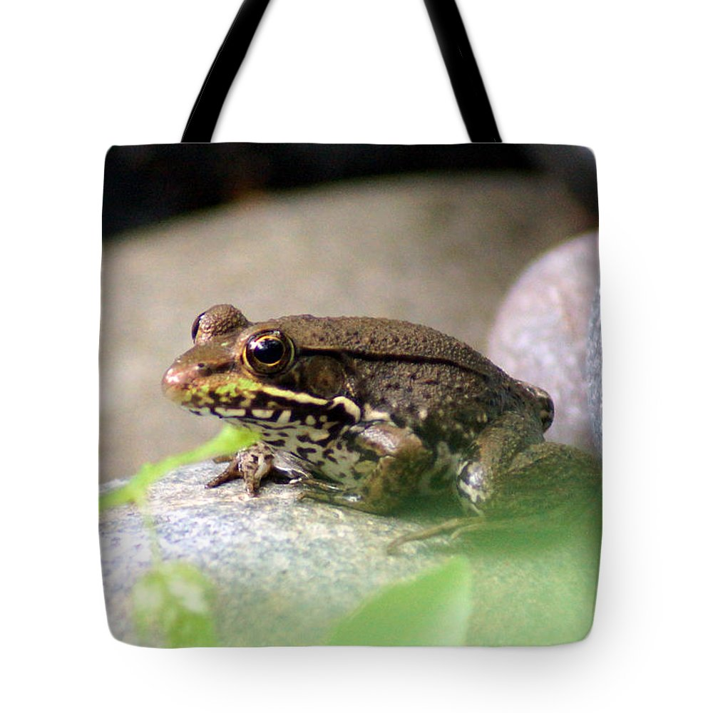 The Bronze Frog Tote Bag featuring the photograph Bronze Frog by Kim Pate
