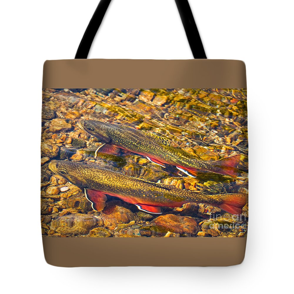 Animal Tote Bag featuring the photograph Brook Trout by Alice Cahill