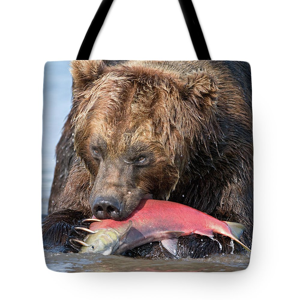 Brown Bear Tote Bag featuring the photograph Brown Bear Ursus Arctos Feeding by Sergey Gorshkov