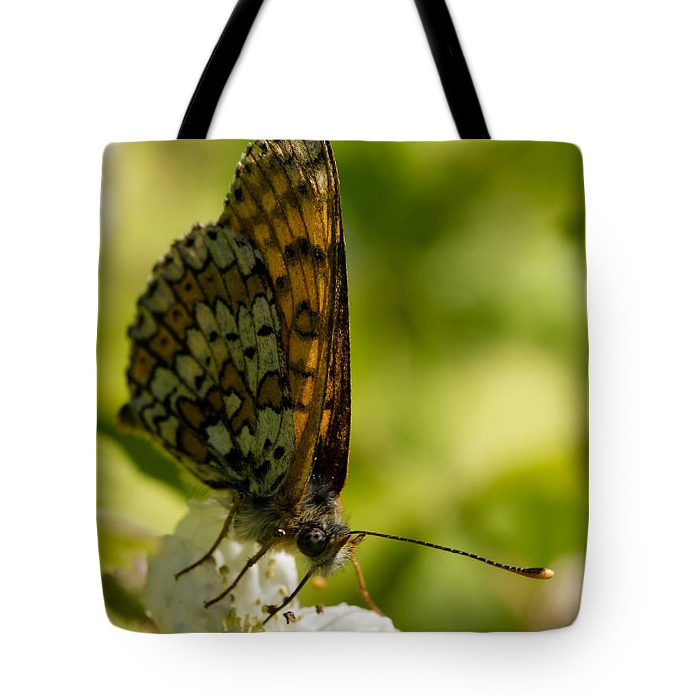 Brown Butterfly Tote Bag featuring the photograph Brown Butterfly by Brothers Beerens