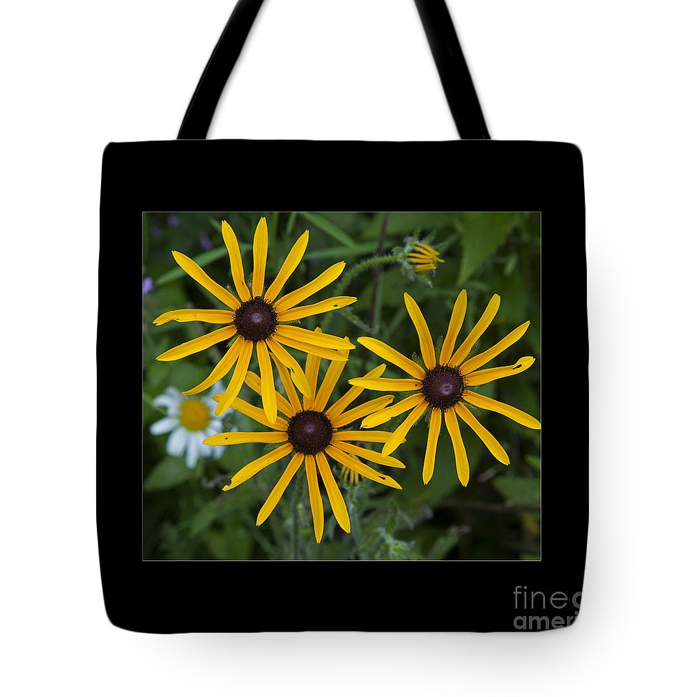Brown Eyed Susan Tote Bag featuring the photograph Brown Eyed Girl by John Stephens