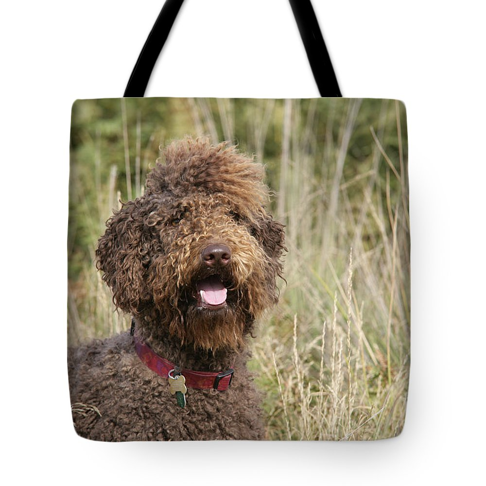 Labradoodle Tote Bag featuring the photograph Brown Labradoodle In Field by John Daniels