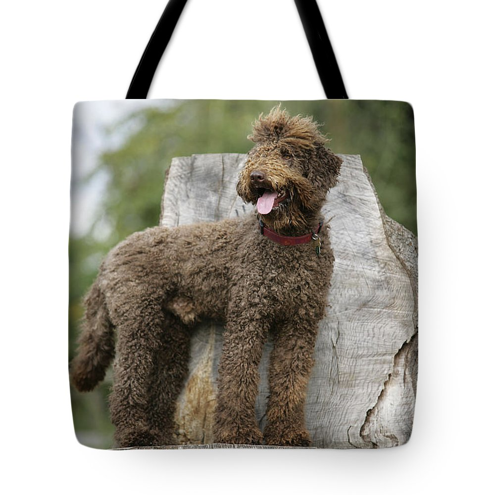 Labradoodle Tote Bag featuring the photograph Brown Labradoodle Standing On Tree Stump by John Daniels