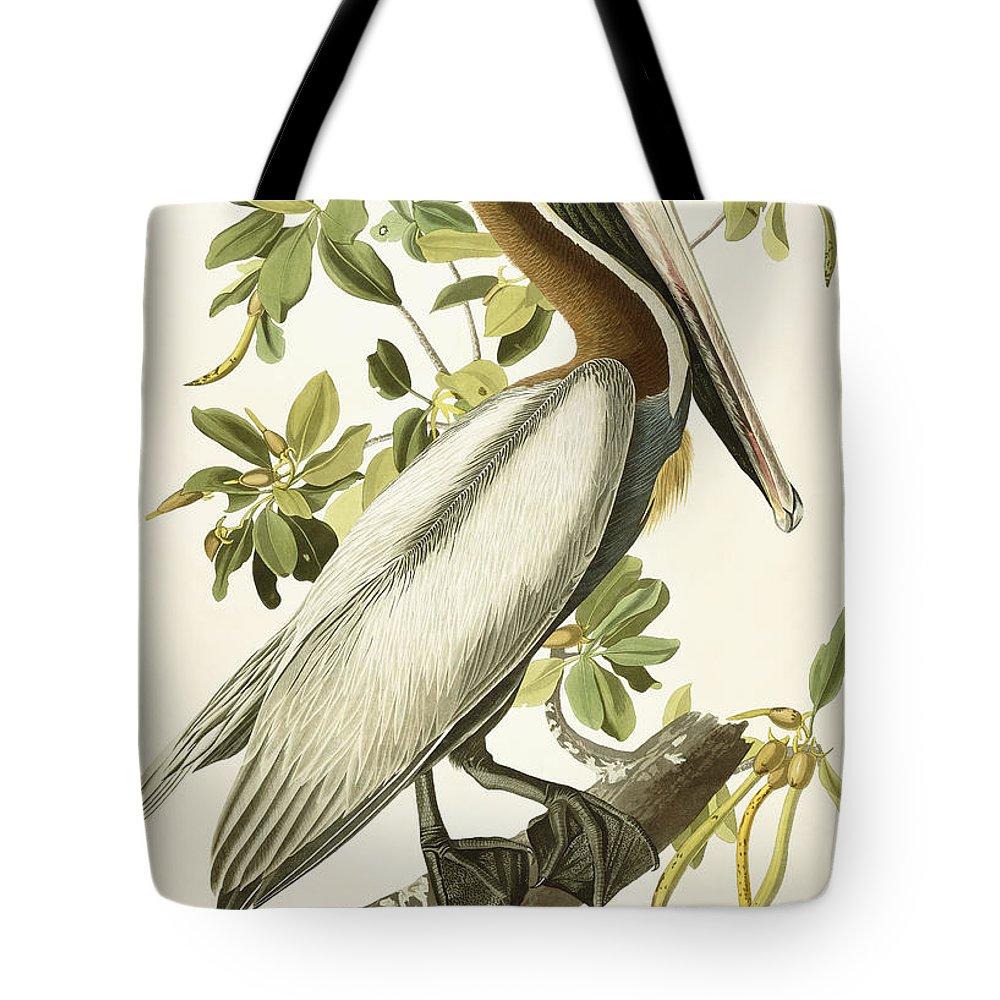 Brown Pelican Tote Bag featuring the painting Brown Pelican by John James Audubon