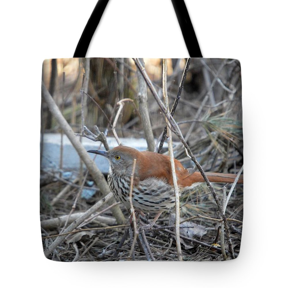 Wild Bird Tote Bag featuring the photograph Brown Thrasher by Thomas Phillips