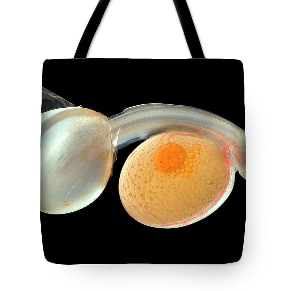Alevin Tote Bag featuring the photograph Brown Trout Alevin Hatching by Ingo Arndt