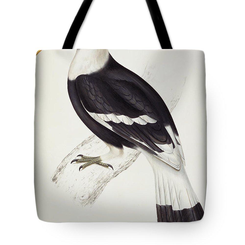 Hornbill Tote Bags